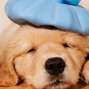home-pet-first-aid